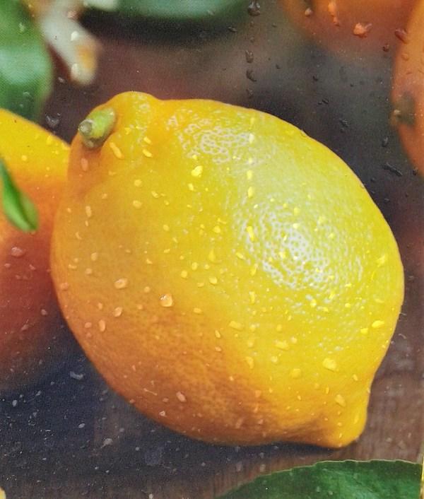 limonero cuatro estaciones ureka