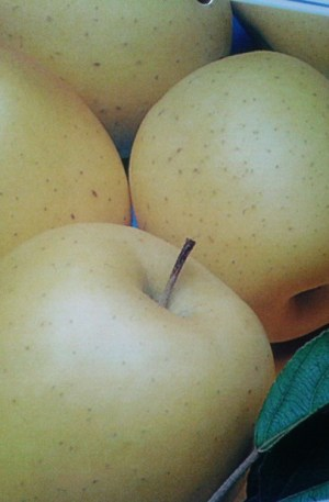 manzano golden, manzana amarilla, frutal