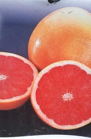 pomelo citrus paradisi